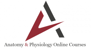 Anatomy and Physiology Online Courses Learners Portal